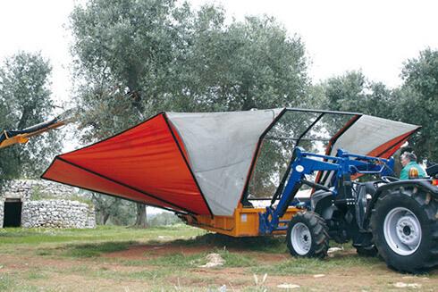 Primolio Raccolta olive